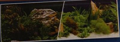 fotoachtergrond planten 2 / planten 7 - blister